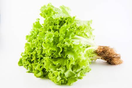 lactuca sativa: Romaine lettuce (Lactuca sativa) isolated in white background