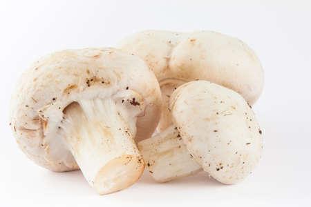 harvested: Freshly harvested mushroom (Agaricus bisporus) isolated in white background