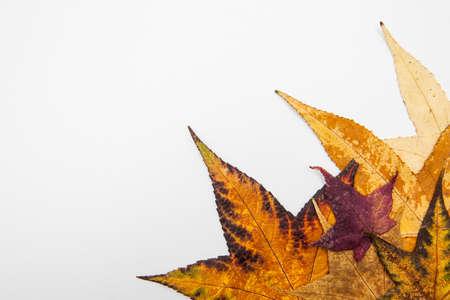 botanics: Colorful autumn leaves background