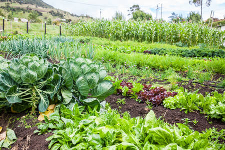 Boomgaard met verschillende soorten groenten