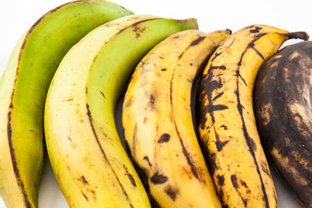 Plantain or Green Banana (Musa x paradisiaca) in different stages of maduration isolated in white background Stock Photo
