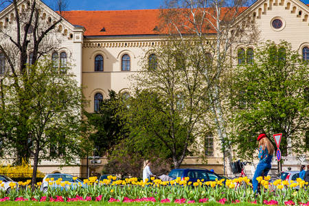 Beautiful flowers in a sunny early spring and the building of the Faculty of Law of the University of Zagreb located in the Republic of Croatia Square Publikacyjne