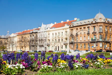 Early spring flowers and beautiful antique architecture at lower town in Zagreb capital of Croatia 免版税图像