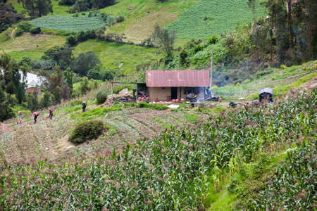 Farmers harvesting potatoes on farmland in the Department of Boyacá in Colombia 写真素材