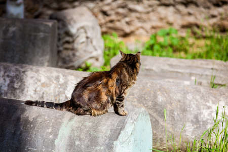 Stray cats sunbathing on top of the ruins of Roman columns at the Piazza Vittorio Emanuele II in Rome