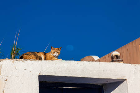 The cat and the moon in a beautiful day in Santorini