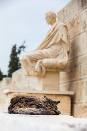 Cat sleeping next to the statue of the dramatist Menander at the Theatre of Dionysus Eleuthereus the major theatre in Athens and considered the first theatre of the world which is built at the foot of the Athenian Acropolis dated to the 6th century BC