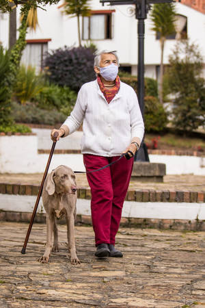 Senior woman wearing a home made face mask and having a short walk outdoors with her pet during the coronavirus quarantine de-escalation 写真素材