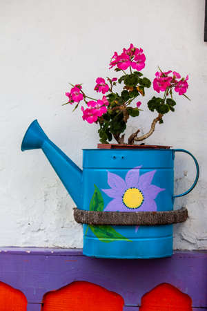 Geranium planted in a watering can at the beautiful streets of Salento in Colombia Standard-Bild