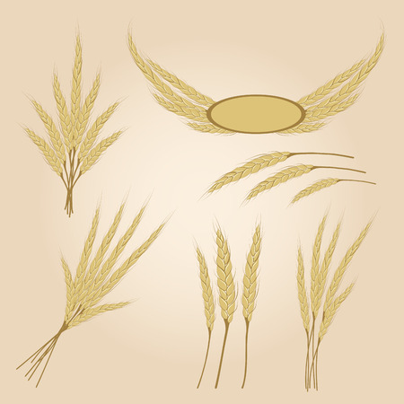 rye: Ripe yellow rye ears, agricultural vector illustration