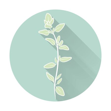 aromatic: Vector fresh thyme herbs. Aromatic leaves used to season meats, poultry, stews, soups. Flat icon with long shadow effect in stylish colors of web design objects, business, office and marketing items. Illustration