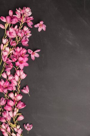 Fresh pink flowers on dark slate table. Top view with copy space