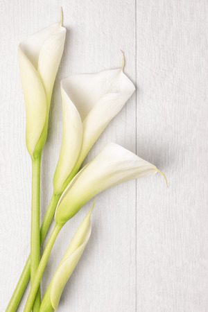 Elegant spring flower, calla lily on rustic wooden table. For wedding background image. Top view with copy space Reklamní fotografie - 56275733