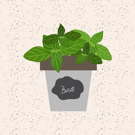 ベクトル - 植木鉢に新鮮なバジルのハーブ。芳香族葉花束おばあちゃんシーズン肉、家禽、シチュー、スープ、するために使用  イラスト・ベクター素材