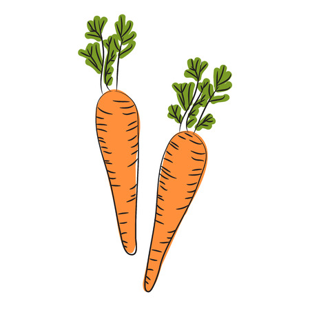 Farm carrot vegetable isolated sketch. Fresh carrot orange root with green leaves. Carrot plant icon for vegetarian food, organic farming themes design