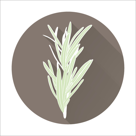 meats: fresh rosemary herbs. Aromatic leaves used to season meats, poultry, stews, soups. Flat icon with long shadow effect in stylish colors of web design objects, business, office and marketing items.
