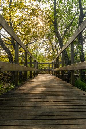 Walkway in Lagoas de Bertiandos natural park, Ponte de Lima - Portugal.
