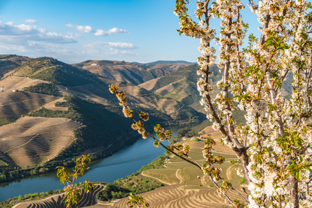 View of the terraced vineyards in the Douro Valley and river near the village of Pinhao, Portugal. Concept for travel in Portugal and most beautiful places in Portugal. Reklamní fotografie