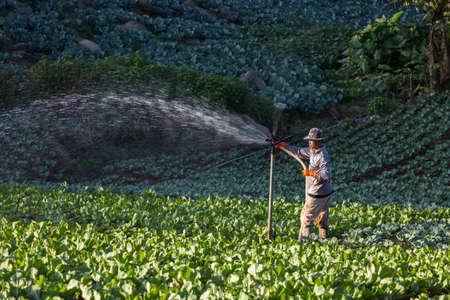 Provincia de Phetchabun, Tailandia - Octubre 26,2012: Jardinero están regando su campo de col en Phu Tab Berk, provincia de Phetchabun, Tailandia. Foto de archivo - 49413353