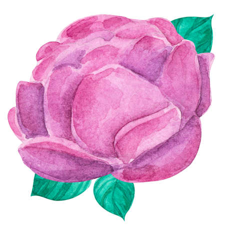 Beautiful watercolor peony. Isolated drawing on white background. Image for printing of cards, on wallpaper, on fabric.