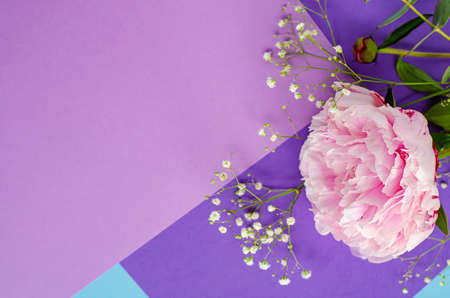 Composition with flowers. Peonies. Womens cards, congratulations. Beautiful delicate pink background. Top view. Flat lay. Copy space.