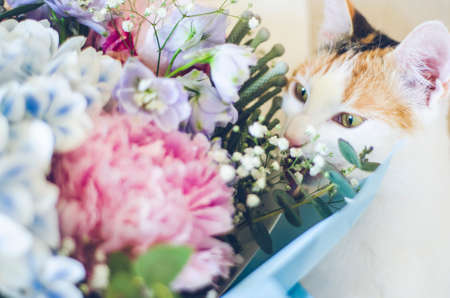 Bouquet of flowers close-up. Tricolor domestic cat sniffing the flowers. Peonies, hydrangea and others. Soft focus. Zdjęcie Seryjne
