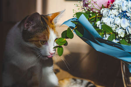 Bouquet of flowers close-up. Tricolor domestic cat looks at the flowers. Peonies, hydrangea and others. Soft focus.