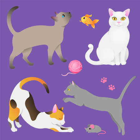 Different breeds of cats tricolor, gray, white