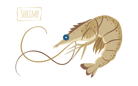 Shrimp, vector cartoon illustration