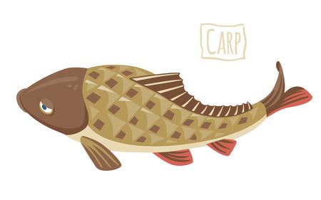 crucian: Carp, vector cartoon illustration