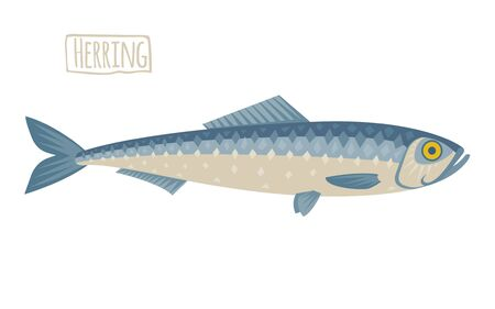 Herring illustration, flat, cartoon