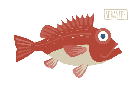 sealife: Sebastes vector illustration