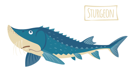 fish animal: Sturgeon, vector cartoon illustration