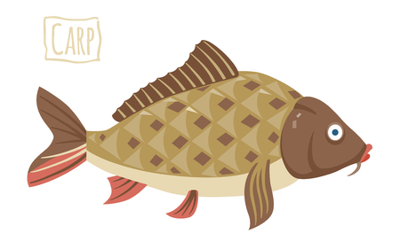 freshwater fish: Carp, vector cartoon illustration