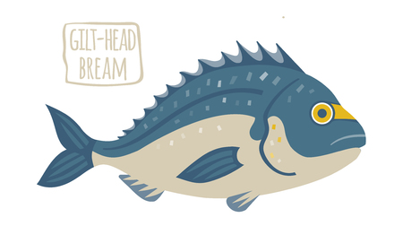 gilthead bream: Gilt-Head Bream vector illustration Illustration