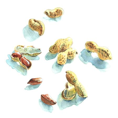 handful: Watercolour sketch of handful of peanuts on white Stock Photo