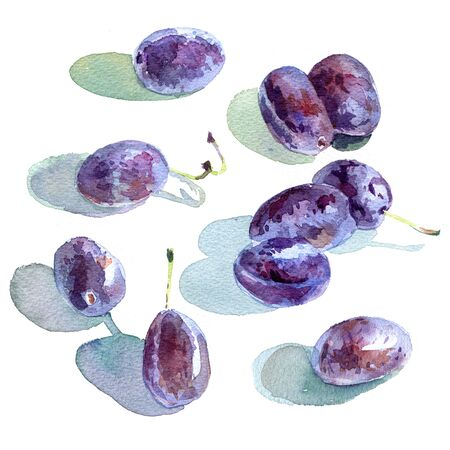 plums: Watercolour sketch of plums on white background Stock Photo