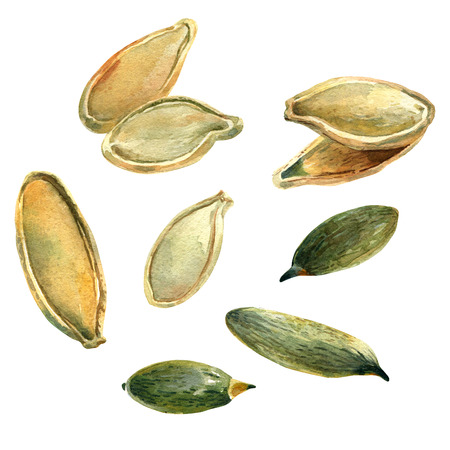closeup: Watercolour illustration of a handful of pumpkin seeds, clipping paths included Stock Photo