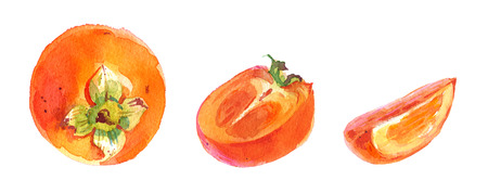 persimmon: Watercolor painting of ripe persimmon, sliced