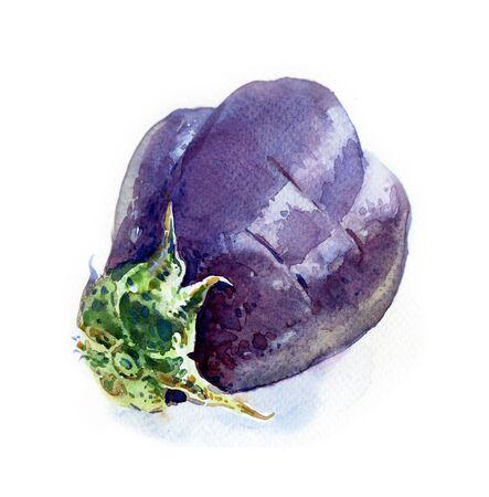 watercolour: Watercolour sketch of an eggplant