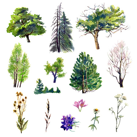 dry flowers: Set of trees and plants painted with watercolors Stock Photo