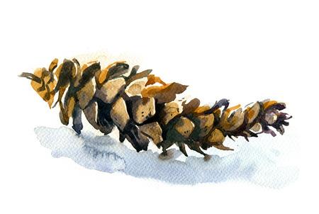 白い背景の上の円錐形の松の水彩イラスト