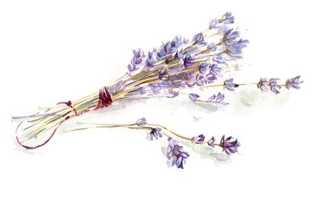 flor morada: Ramo de la lavanda, ejemplo de la acuarela Foto de archivo