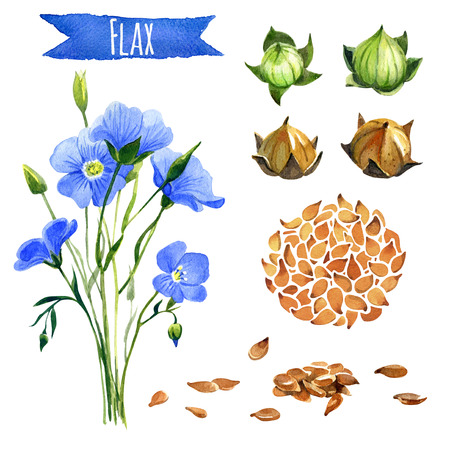 Flax, hand-painted watercolor set, vector clipping paths included