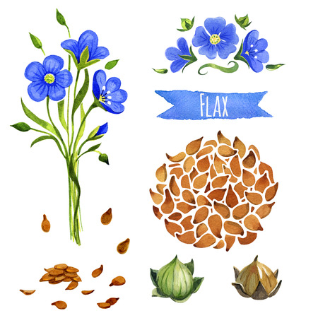 flax seed: Flax, hand-painted watercolor set, vector clipping paths included