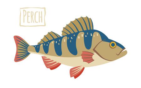 freshwater fish: Perch, cartoon illustration