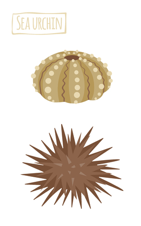 Sea urchin, icon cartoon illustration