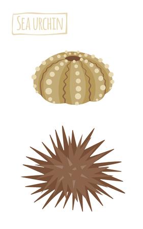sea urchin: Sea urchin, icon cartoon illustration