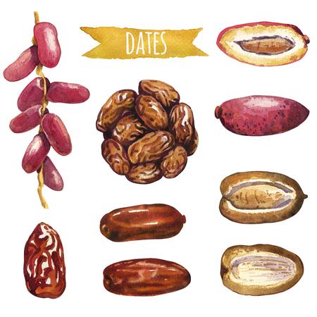 dattes: Dates, jeu d'aquarelle peinte à la main, des chemins vecteur d'écrêtage inclus Banque d'images