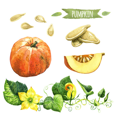 Pumpkin, hand-painted watercolor set, vector clipping paths included Stock Photo
